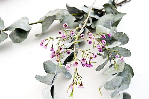 Olejek dōTERRA | Eucalyptus | Olejek Eukaliptusowy – 15 ml