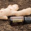 Olejek dōTERRA | Ginger | Olejek Imbirowy – 15 ml